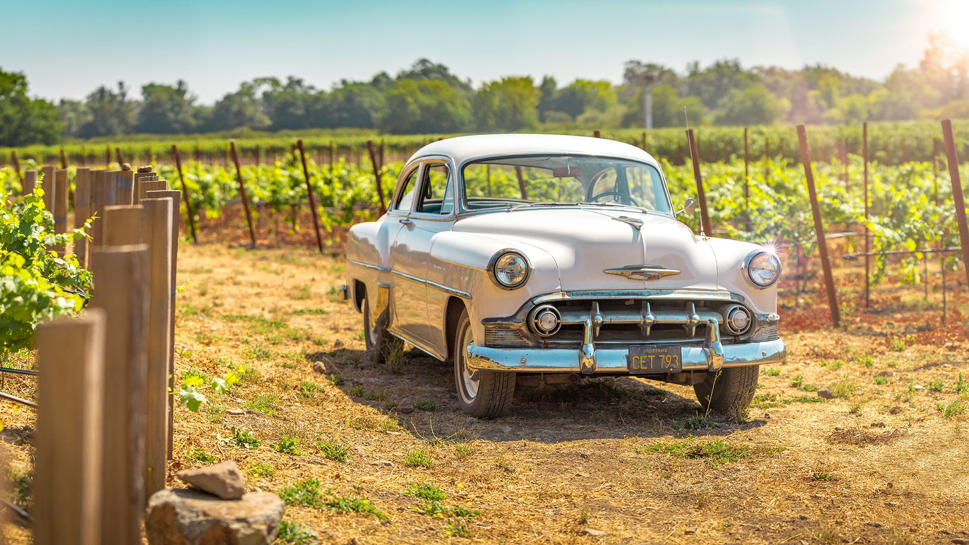 Car colored shot and Vineyard