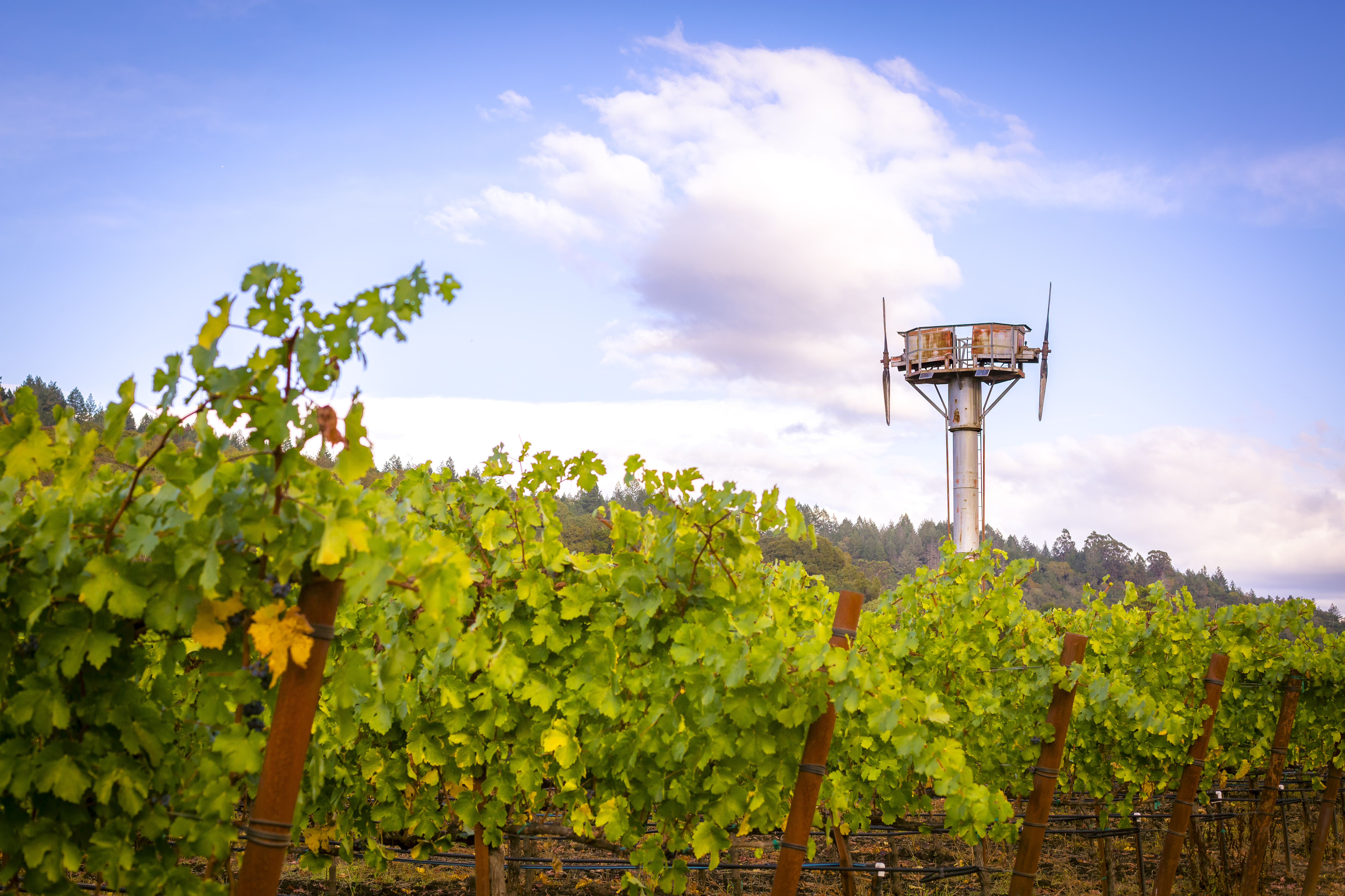 Vineyard and Sky, Napa Valley